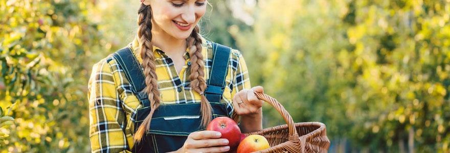 paniers de fruits bio en entreprise